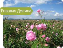 Розовая долина Казанлык