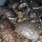 Музей Черного моря и Аквариум Варна 3